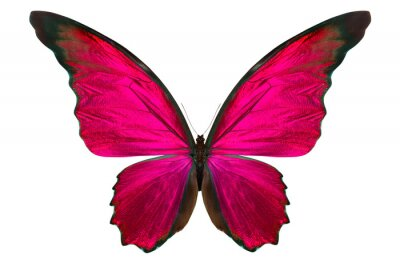 Bild schönen Schmetterling isoliert auf weiß