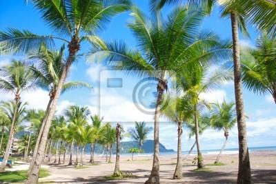 Schönen tropischen Strand mit Palmen in Jaco, Costa Rica