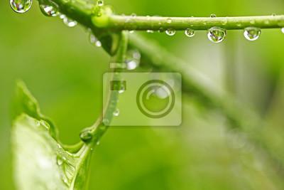 Bild Schönes grünes Blatt mit Wassertropfen