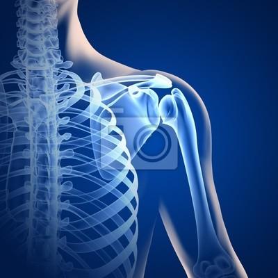 Schulter - anatomie - 3d-grafik leinwandbilder • bilder anatomisch ...