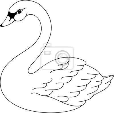 Schwan Malvorlagen Leinwandbilder Bilder Wasser Vogel Cygnet