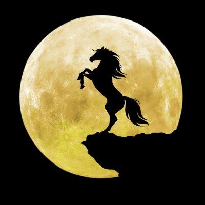 Bild Schwarze Pferd Silhouette