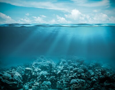 Bild Sea or ocean underwater deep nature background