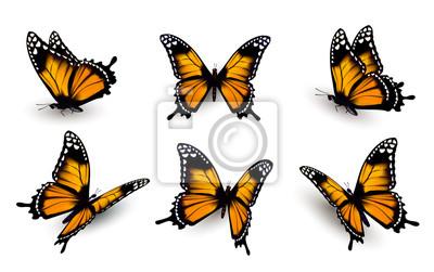 Bild Sechs Schmetterlinge eingestellt. Vektor.