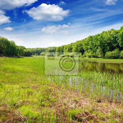 Bild See in den Wald