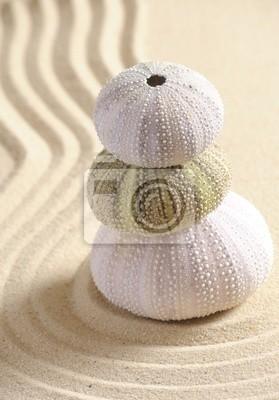 Bild Seeigel -Shell in den Sand
