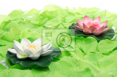 Bild Seerosen umgeben von grünen Blütenblätter