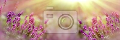 Bild Selective and soft focus on lavender flower, beautiful lavender flower in flower garden