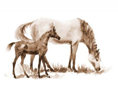 Bild Sepia Aquarell Stute und Fohlen auf weiß. Schöne handgemalte Darstellung von zwei Pferden auf dem Feld.