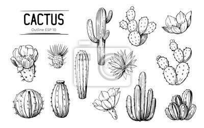 Bild Set of cacti with flowers. Hand drawn illustration converted to vector