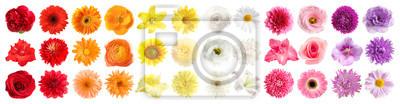 Bild Set of different beautiful flowers on white background. Banner design