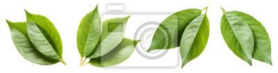 Bild Set of green leaves, isolated on white background