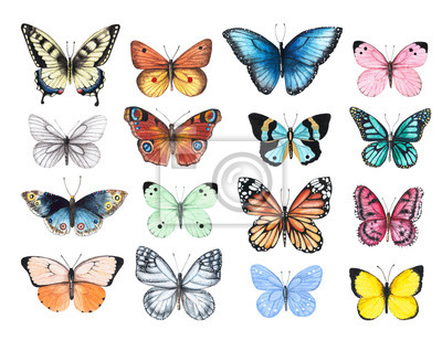 Bild Set of watercolor illustrations depicting bright butterflies isolated on a white background, hand-painted