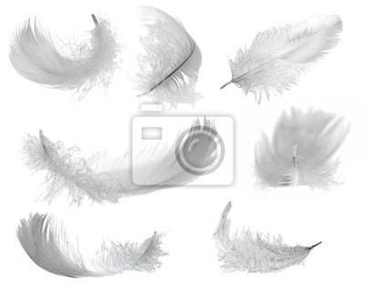 Bild seven white feathers