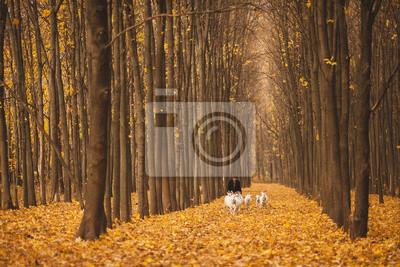 Shepherd mit einer Herde von Ziegen zu Fuß durch den herbstlichen Wald