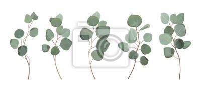 Bild Silbernes Dollargrün des Eukalyptus, natürliche Blätter des Gummibaumlaubs u. Verzweigte tropische Elemente der Designerkunst, die Bündelhand gezeichnet in Aquarellart eingestellt wurde. Dekorative sc