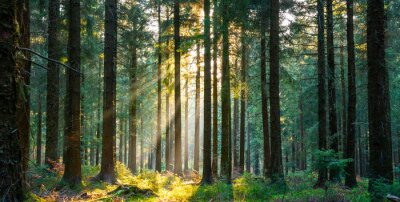 Bild Silent Forest in spring with beautiful bright sun rays
