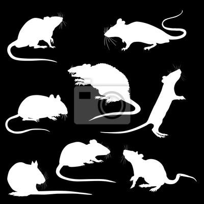 Ratte mit Wurst Clipart, Bild, Cartoon kostenlos | Clipart, Bilder,  Kostenlos