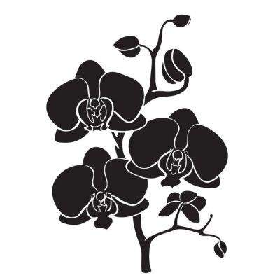 Bild Silhouette Orchidee Zweig