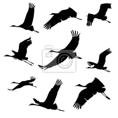 Bild Silhouetten von fliegenden Vögeln. Kräne