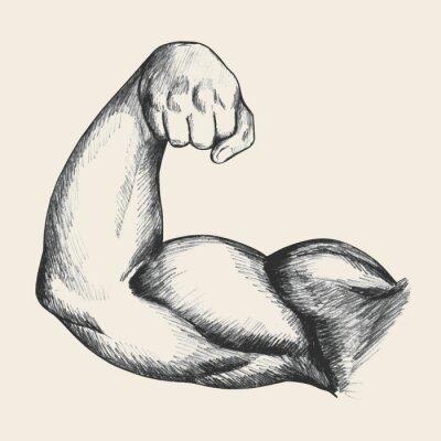 Bild Sketch illustration of muscular human male right arm