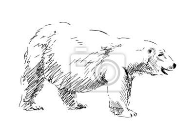 Skizze eines Eisbären. Vektor-Illustration
