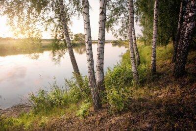 Bild slender birch