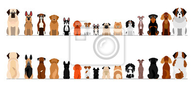 Bild small and large dogs border border set, full length, front and back