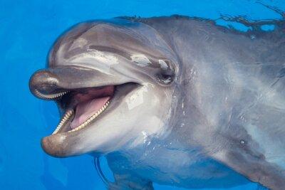 Bild Smiling dolphin