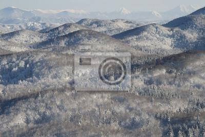 Snowy Waldlandschaft