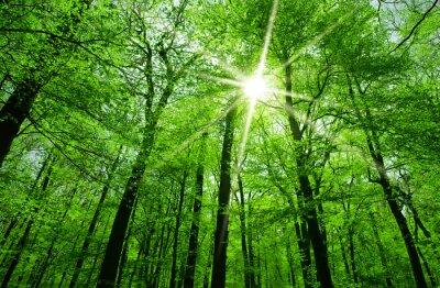 Bild Sonne scheint durch Baumzweige