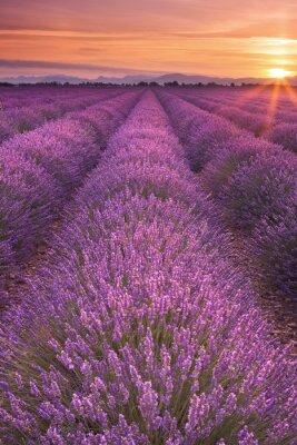 Bild Sonnenaufgang über Feldern von Lavendel in der Provence, Frankreich