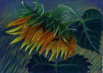Bild Sonnenblume. Pastell-