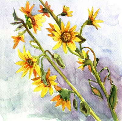 Bild Sonnenblumen, Aquarell