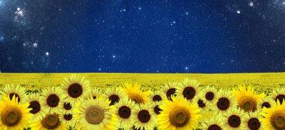Bild Sonnenblumen-Feld