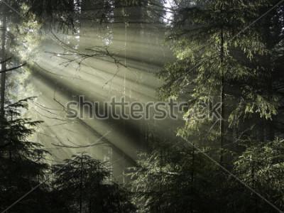 Bild Sonnenlicht scheint durch die Bäume