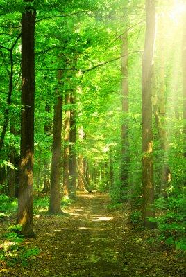 Bild Sonnenlicht Wald