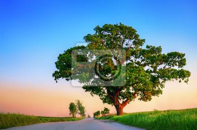 Sonnenuntergang-Baum