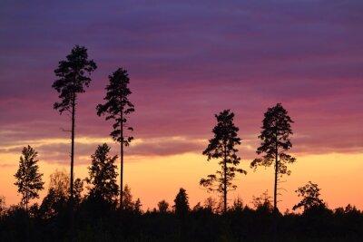 Bild Sonnenuntergang im ländlichen Raum
