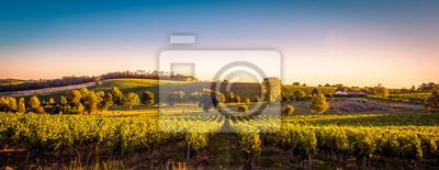 Bild Sonnenuntergang Landschaft Bordeaux Weinberg Frankreich