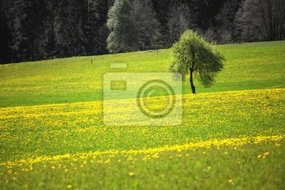 Sonnig Frühjahr Saison Landschaft gelb gefärbt blühende Wiese mit Baum.