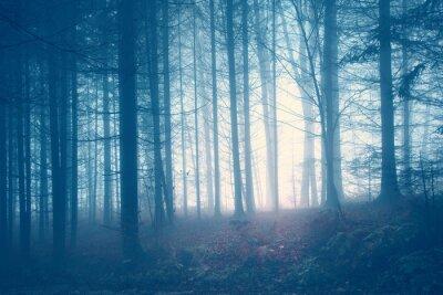 Bild Spooky Jahrgang Farbe Wald