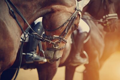 Bild Sports brown horses before competitions.