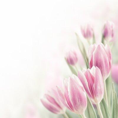 Bild Spring Background with Tulip