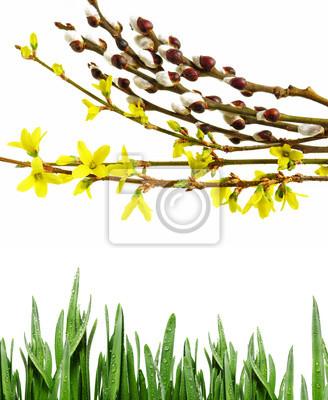 Bild spring branch and green grass