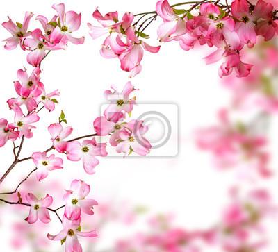 Bild spring  branch with flowers