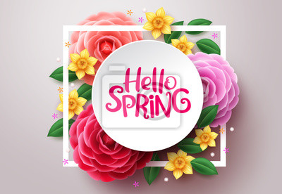 Bild Spring flower vector background. Hello spring text in white frame space and colorful camellia and crocus flowers in white background. Vector illustration.