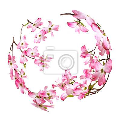 Bild spring flowering branch in the circle