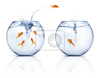 Bild Springen Goldfische