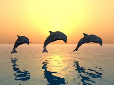 Bild Springende Delfine